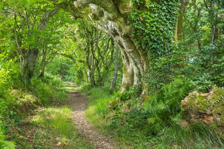 Woodland path in Coed Pen yr Allt Ddu
