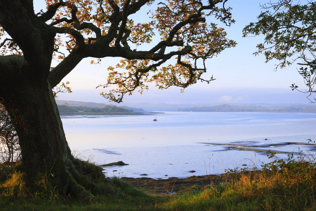 Photograph of tree overlooking the Daugleddau Estuary at Picton Point