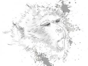 A sketch of the Barbary ape