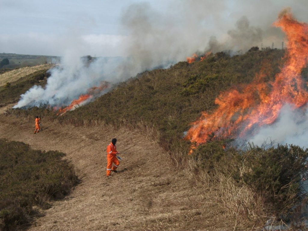 Controlled burn at Brynberian, Pembrokeshire, Wales, UK