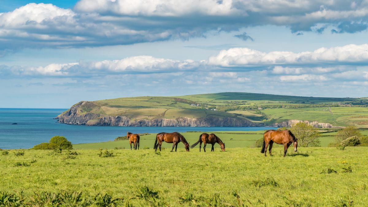 Horses at the cloudy Pembrokeshire coast, seen near Parrog, Pembrokeshire, Wales, UK