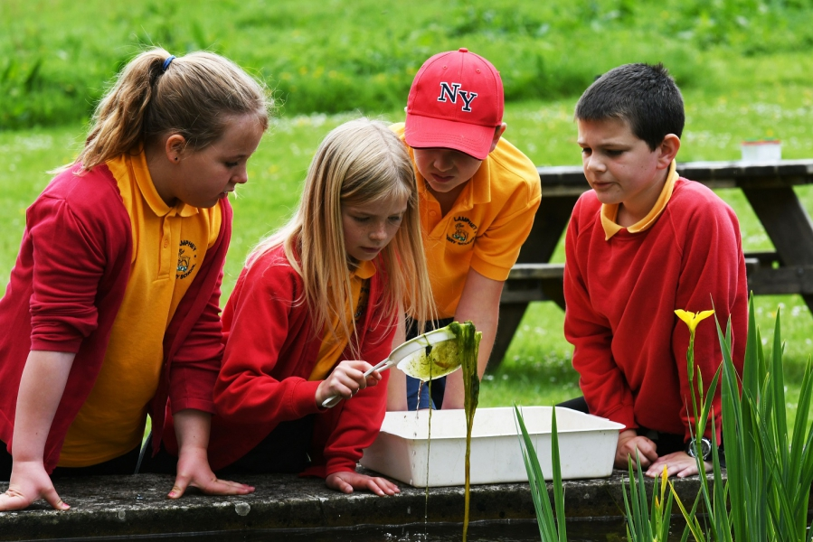 Primary school pupils pond dipping at Stackpole, Pembrokeshire Coast National Park, Wales, UK
