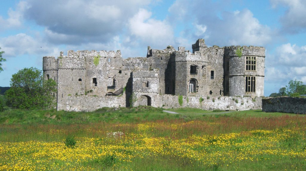 Wildflowers growing at Carew Castle, Pembrokeshire Coast National Park, Wales, UK