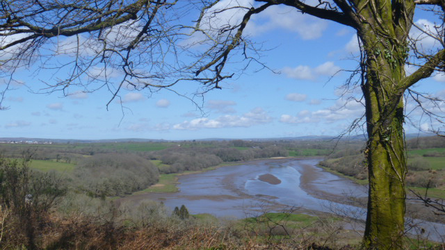 Little Milford Woods, Daugleddau Estuary