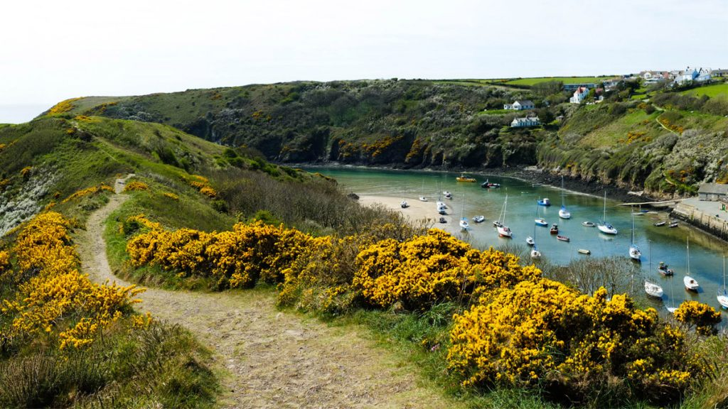 Solva Harbour from the Gribyn