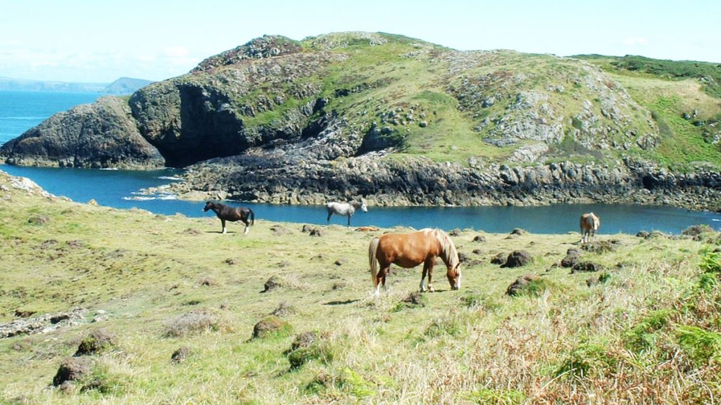 Ponies at Tresinwen near Strumble Head