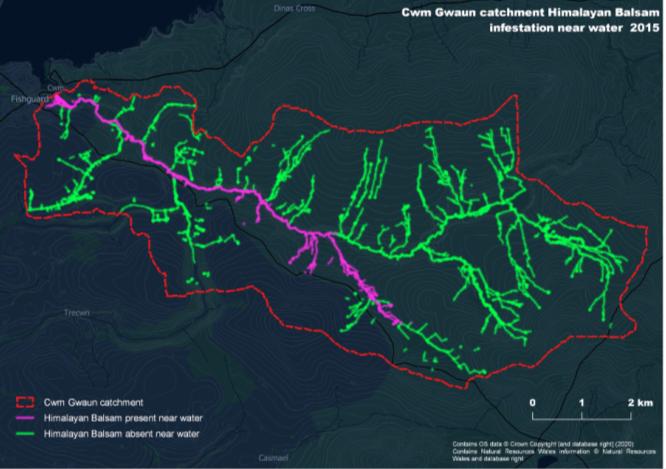 Map showing Cwm Gwaun Himalayan Balsam infestation (2015)