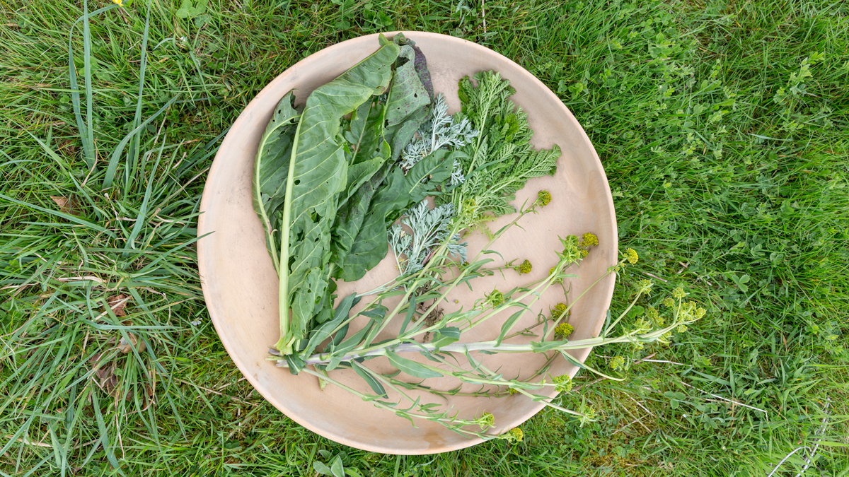 Plate of fresh herbs at Castell Henllys Iron Age Village
