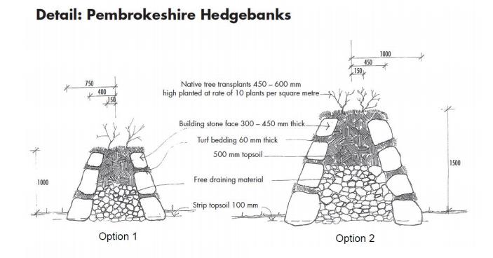 Pembrokeshire Hedgebanks illustration