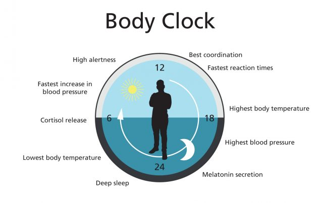 Graphic showing the body clock