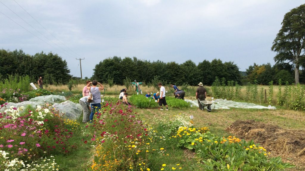 People working on an allotment