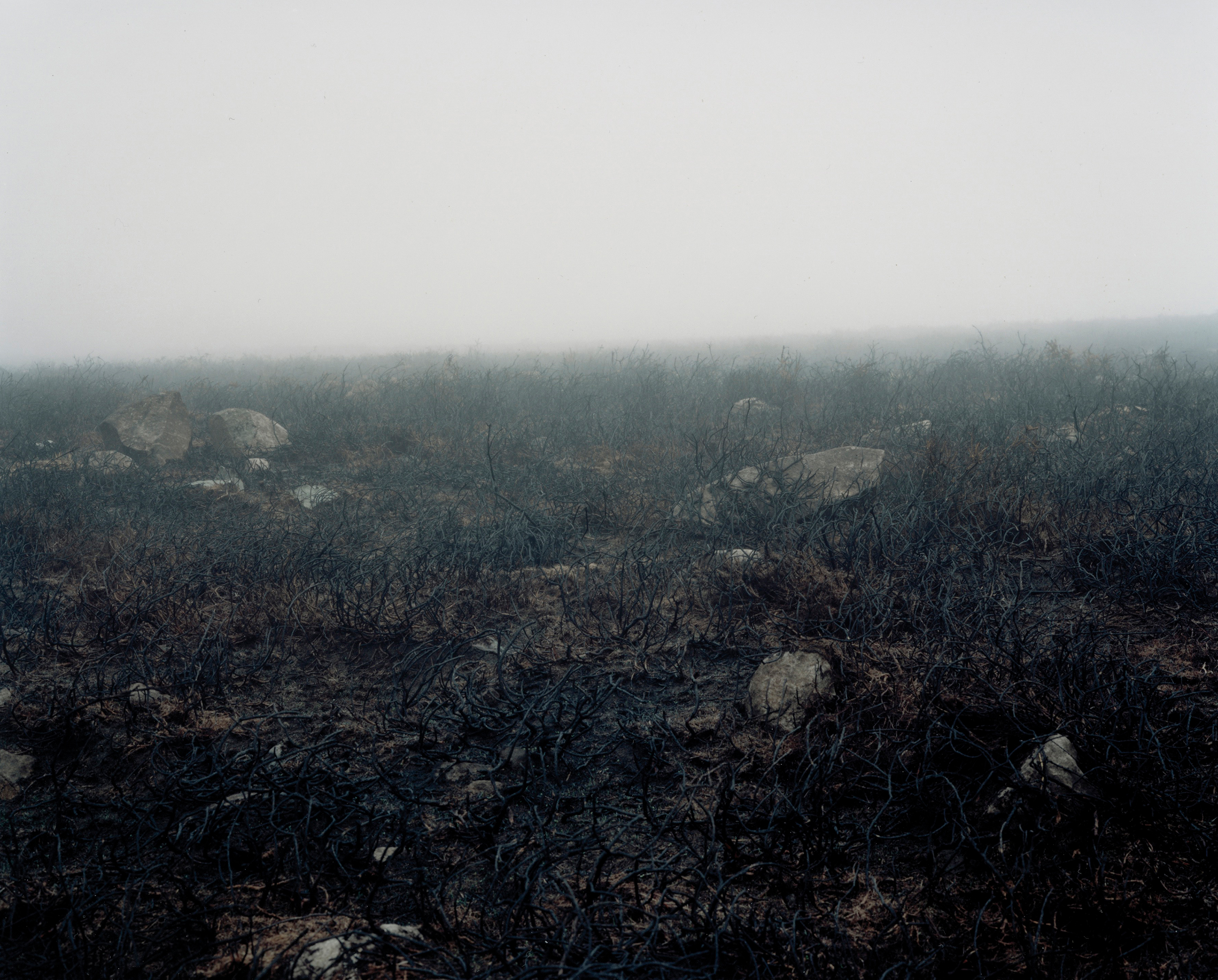 Photograph of an area of burnt gorse