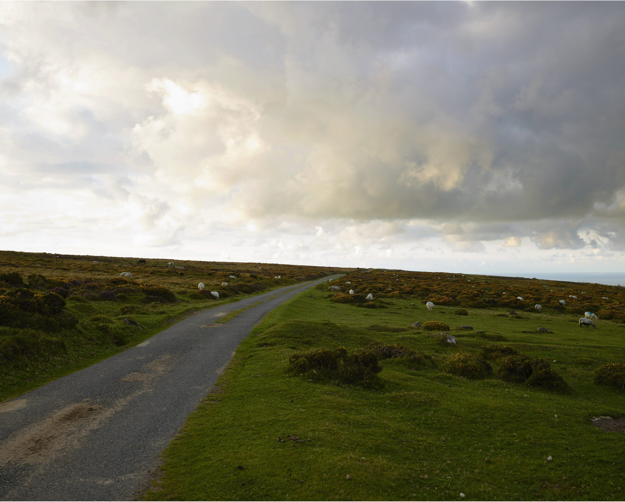 Photograph of sheep grazing either side of a narrow country road