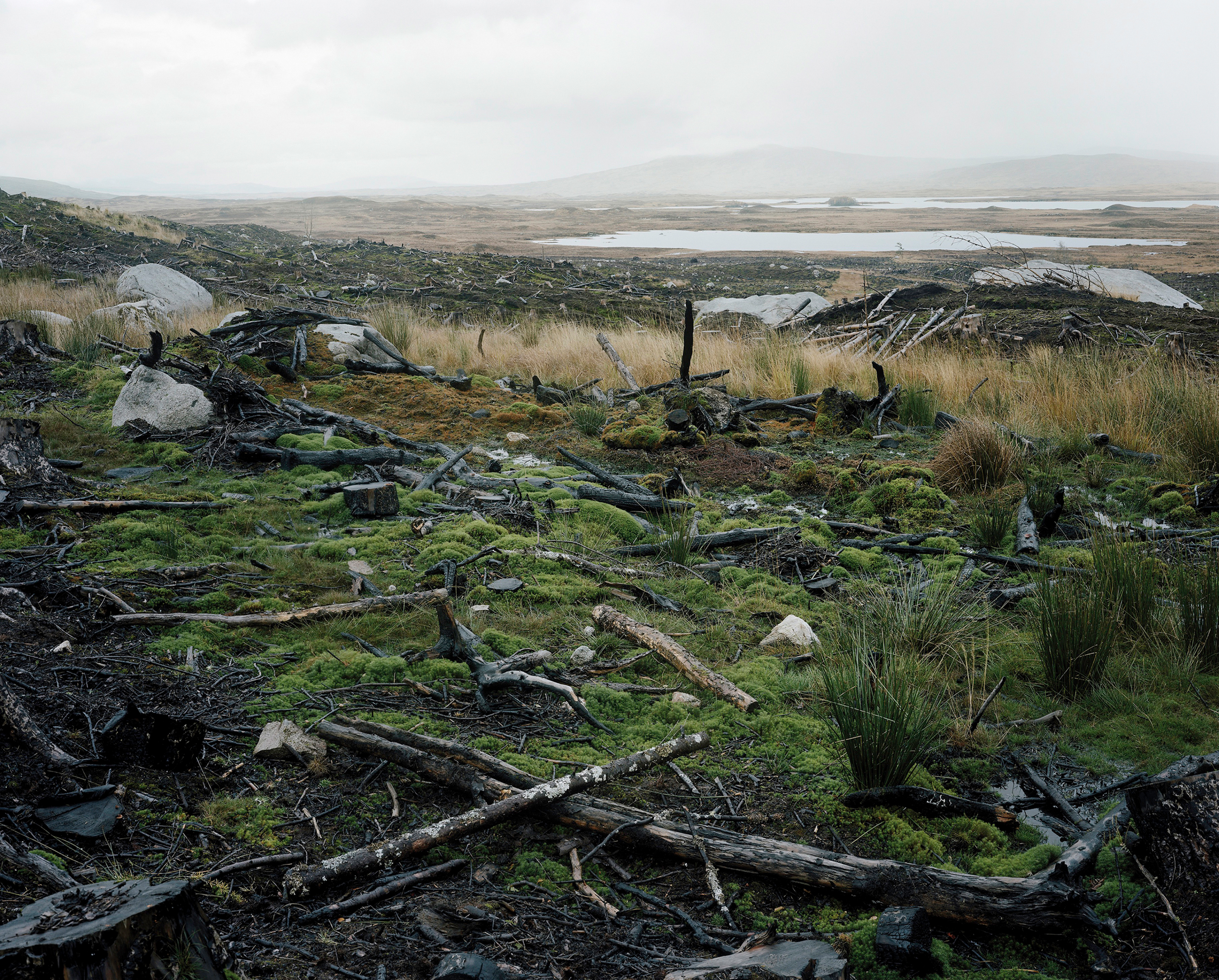 Photograph of a moor blighted by a conifer plantation