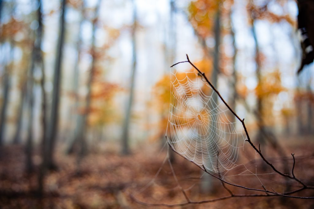 Selective focus shot of spider web on a twig in an autumn forest